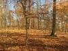 Galeriebild 18 Blick in den Wald