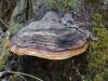 Galeriebild 23 Blick auf einen Pilz