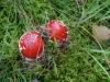 Galeriebild 28 Blick auf einen Pilz