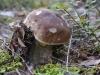 Galeriebild 29 Blick auf einen Pilz