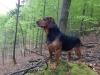 Galeriebild 3 Hund im Wald
