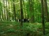 Galeriebild 32 Blick in den Wald