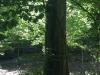 Galeriebild 5 Blick auf ein RuheBiotop