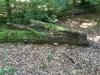 Galeriebild 8 Blick in den Wald